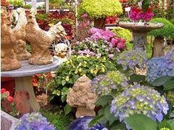 Дачные цветы фото и название
