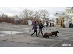 Русские медведи фото
