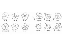 Строение цветка в картинках
