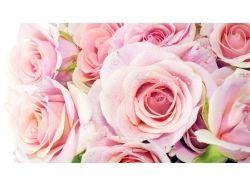 Картинки розовые машины
