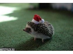 Новогодние картинки с животными 9