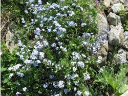 Фотография цветы