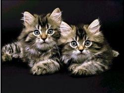 Красивые котята картинки