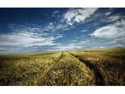 Картинки поле пшеницы