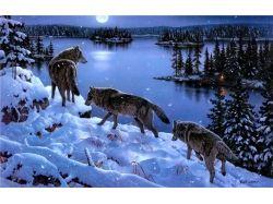 Картинки волка для детей