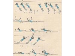 Упражнения при сколиозе в картинках