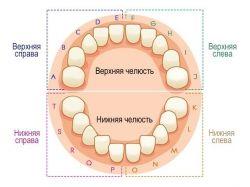 Номера зубов в стоматологии
