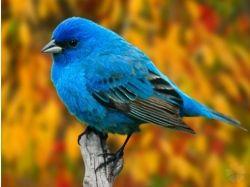 Фото красивых животных