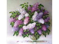 Цветы сирень фото