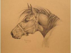 Картинки лошадей карандашом