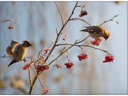 Прилет птиц весной картинки