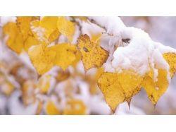 Картинки первый снег
