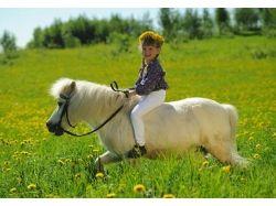 Смотреть картинки с лошадьми