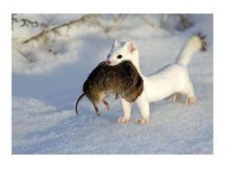 Милые фотки животных 6