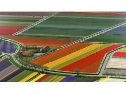 Цветочные поля фото