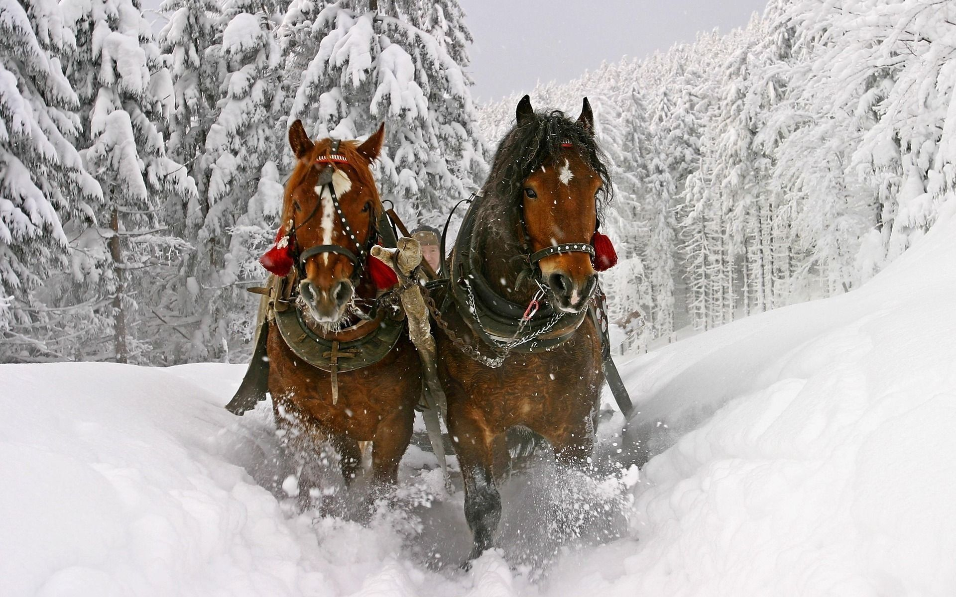 Экскурсия в конный клуб