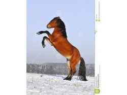 Фото зима лошади