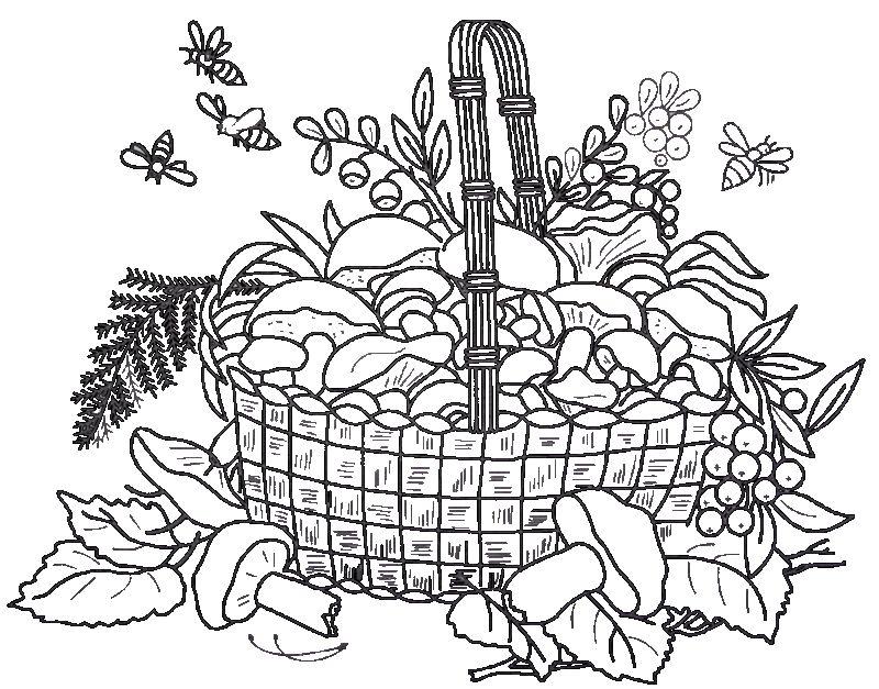 карандашом рисунок с грибами корзинка
