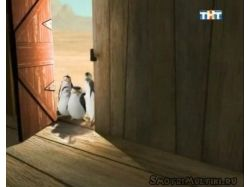 Фото пингвина из мадагаскара