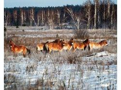 Животные чернобыля фото 1