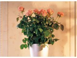 Цветы в вазе рисунки