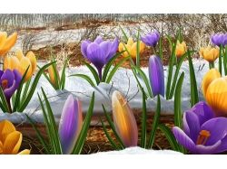Заставки на рабочий стол весна природа