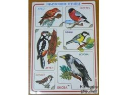 Птицы хабаровского края фото
