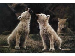 Картинки детенышей диких животных 2