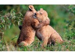 Картинки детенышей диких животных 5
