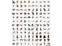 Картинки детенышей диких животных 7