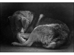 Бездомные животные фото 2