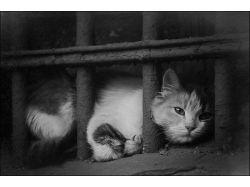Бездомные животные фото 3
