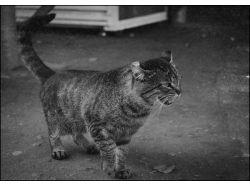Бездомные животные фото 4