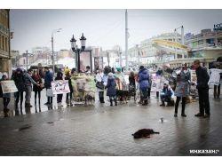 Бездомные животные фото 7