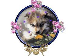 Картинки красивых щенков