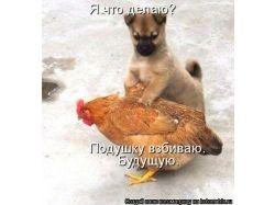 Новые картинки животных 3