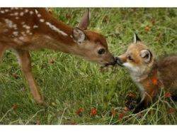 Фото влюбленных животных 8