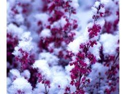 Фото цветы в снегу