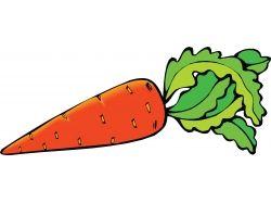 Морковь картинки