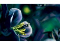 Волшебные цветы картинки
