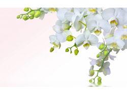 Картинки на рабочий стол орхидеи