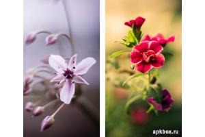 Скачать обои цветы на телефон