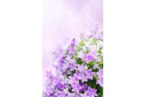 Скачать обои цветы на телефон 2