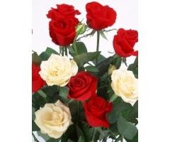 Скачать обои цветы на телефон 6