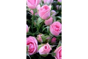 Скачать обои цветы на телефон 7