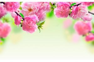 Картинки цветы для рабочего стола