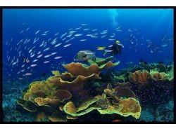 Кусто подводный мир