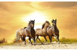 Обои на рабочий стол кони