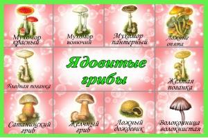 Картинки грибов для детского сада