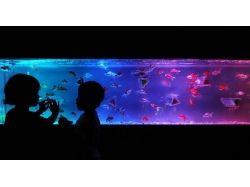 Выставка в туле подводный мир